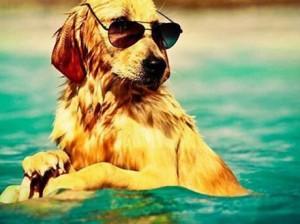 vakantiehuis-met-hond